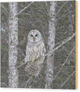 Angel Owl Wood Print
