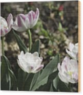 Angelique Peony Tulips Wood Print