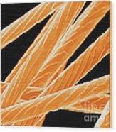 Angora Rabbit Hairs, Sem Wood Print