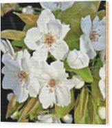 Apple Blossoms 0936 Wood Print