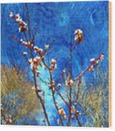 Apricot Blossoms El Valle Wood Print