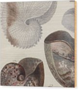 Aquatic Animals - Sea - Shells - Composition - Alien - Wall Art  - Interior Decoration  Wood Print
