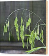 Arching Grass Wood Print