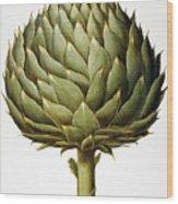 Artichoke, 1613 Wood Print