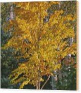 Artistic Fall Colours Wood Print