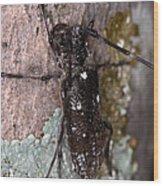Asian Long-horned Beetle Wood Print