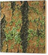 Aspen Bark After The Rain Wood Print