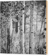 Aspen Trees In Black And White Wood Print