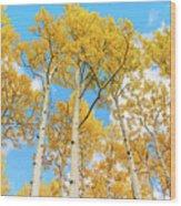 Aspens Above Wood Print