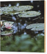 At Claude Monet's Water Garden 6 Wood Print