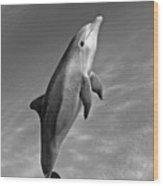 Atlantic Bottlenose Dolphin Wood Print
