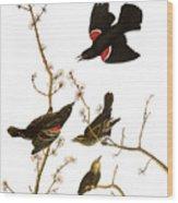 Audubon: Blackbird, (1827) Wood Print