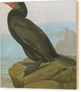 Audubon: Cormorant Wood Print