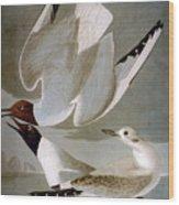 Audubon: Gull Wood Print