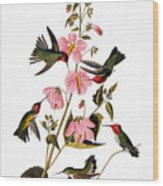 Audubon: Hummingbird Wood Print
