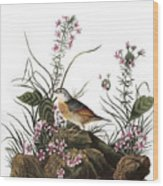 Audubon: Sparrow, (1827-38) Wood Print