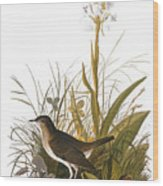 Audubon: Thrush Wood Print