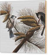 Audubon: Titmouse Wood Print