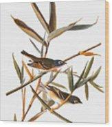 Audubon: Vireo Wood Print