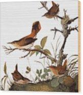 Audubon: Wren Wood Print