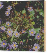 Australian Burr Daisies Wood Print