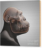 Australopithecus With Skull Wood Print