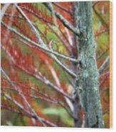 Autumn Colors 25 Wood Print