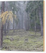 Autumn Coniferous Forest In The Morning Mist Wood Print