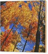 Autumn Forest Wood Print