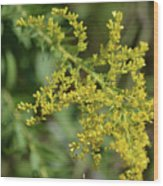 Autumn Goldenrod  Wood Print