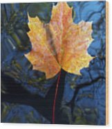 Autumn Leaf On The Water Wood Print