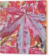 Autumn Red Wood Print