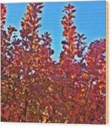 Autumn Reds  Wood Print