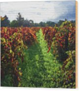 Autumn Vineyard In The Morning  Wood Print