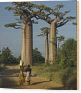 Avenue Des Baobabs Wood Print