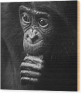 Baby Bonobo Portrait Wood Print