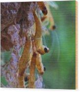 Baby Praying Mantises Wood Print