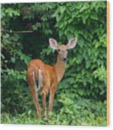 Backyard Deer Wood Print