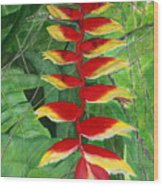 Balinese Heliconia Rostrata Wood Print
