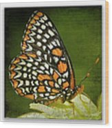 Baltimore Checkerspot Wood Print