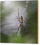Banana Spider Wood Print
