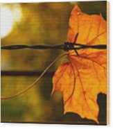 Barbed Autumn Wood Print
