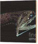 Barbeled Dragonfish Wood Print