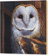 Barn Owl  Wood Print by Anthony Jones