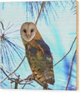 Barn Owl Beauty Wood Print