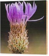 Basket-flower Opening Wood Print