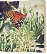 Beach Butterfly Wood Print
