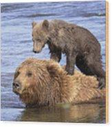 Bear Back Rider Wood Print