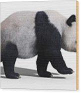 Bear Panda Walking Wood Print