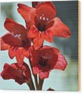 Beatiful Red  Wood Print